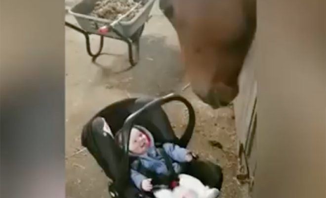 Watch as a Horse Introduces Itself to and Entertains a Curious Baby
