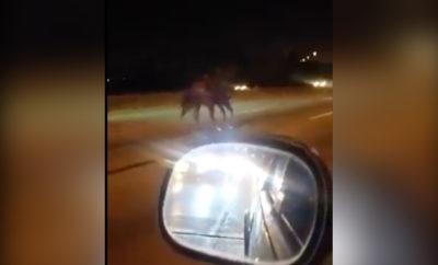 highway horse