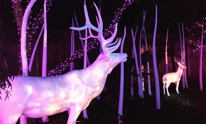 Experts Assure Animals Are Comfortable During Houston Zoo Lights