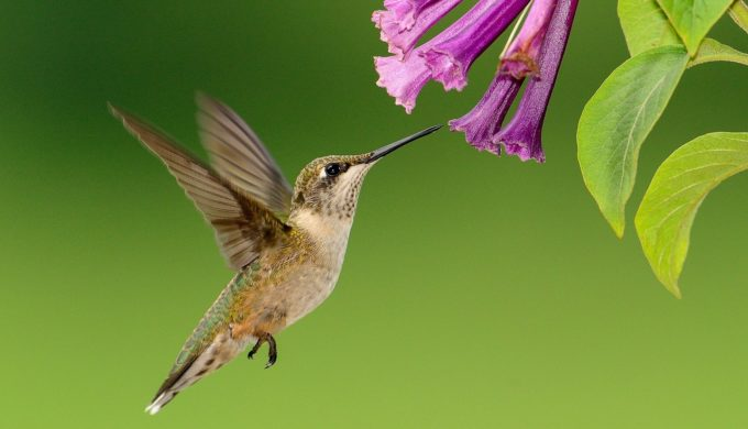 An Easy Food Recipe to Attract Hummingbirds to Your Backyard