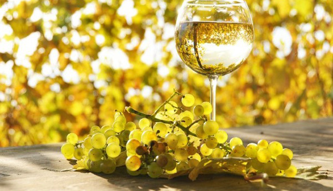 Glass of white wine with white grapes in foreground and yellow golden leaves in background