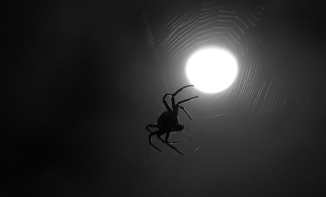 Know Your Phobias Quiz