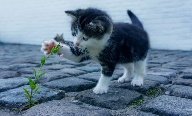 Scientists Have Created a Vaccine for Allergies to Cats