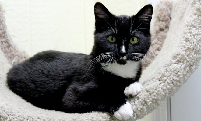 Zero Adoption Fees For Cats And Kittens At Austin Animal Center
