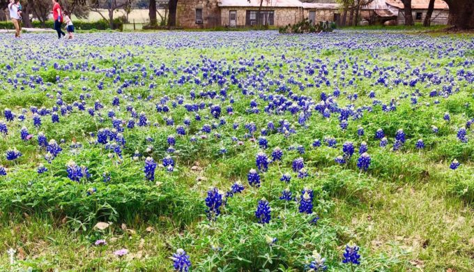 Texas Goes Technicolor With Mind-blowing Bluebonnet Season