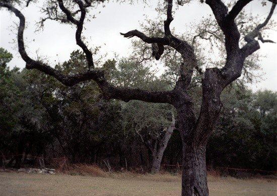 Kyle Hanging Tree