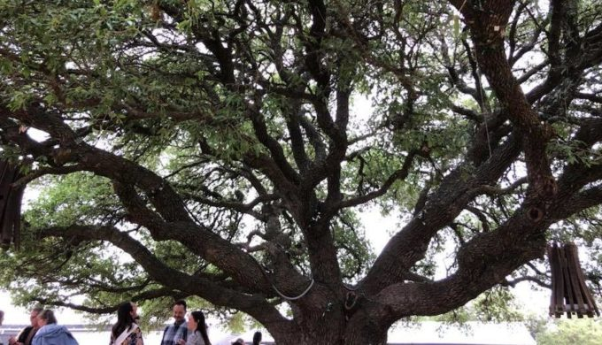 The Time an Occultist Poisoned the 600-year-old Texas Treaty Oak