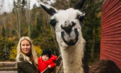 Meet Cuddly Llamas While You Sip Wine or Beer in the Hill Country