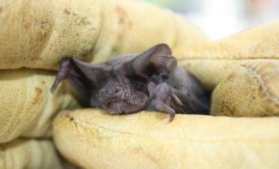 Backyard bat-friendly