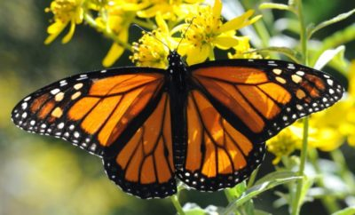 Toyota Texas Develops $1 Million Visitor Center and Pollinator Garden