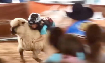 'Mutton Bustin'' Competition Open to Children at Houston Rodeo
