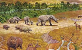 'Texas Serengeti' Fossils Featured Elephants, Alligators, and Camels
