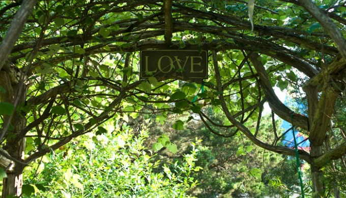 natural gardener, Austin, plants, nature, Texas Hill Country
