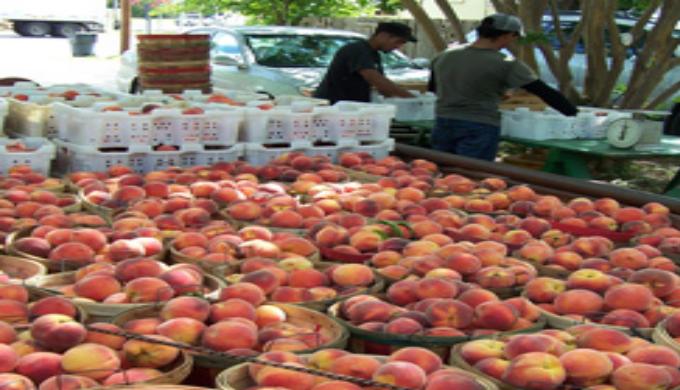peaches peaches peaches