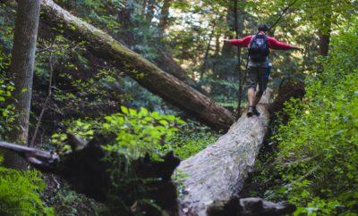 Hiker on fallen tree edible