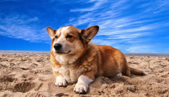 3 Dog-Friendly Texas Beaches That Put Out the Welcome Mat for Pooches