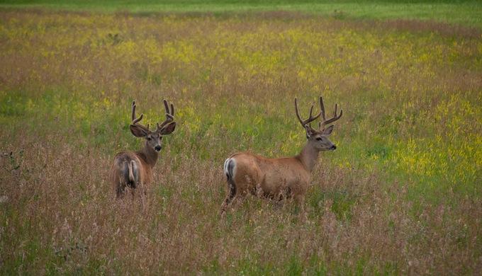 Hunting Doss Texas