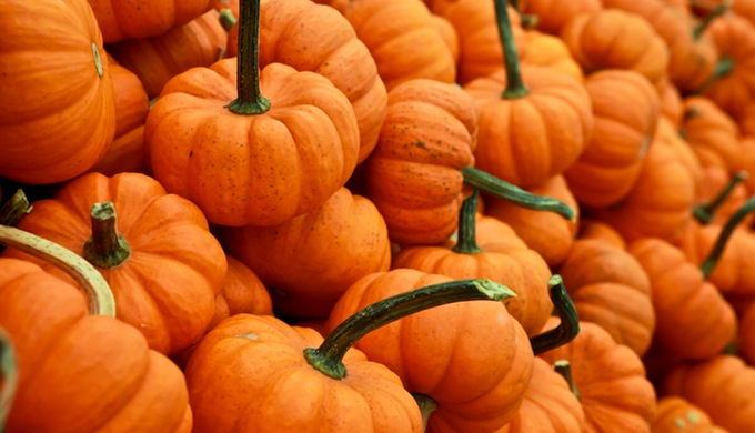 Hill Country Pumpkins