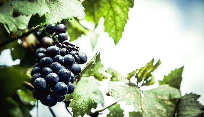 Hye Vineyards