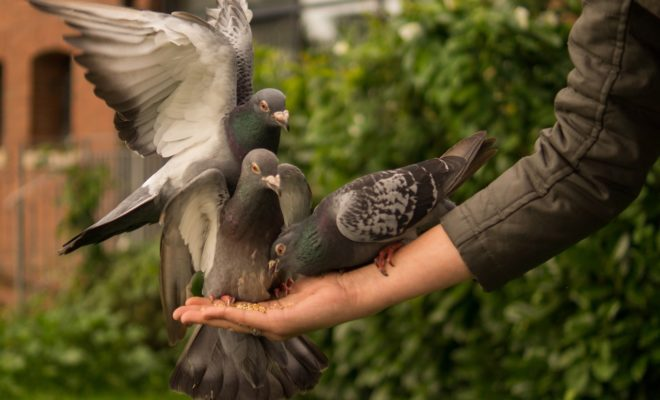 Billy, the Boy Who Loved Pigeons: A Tragic Texas Tale