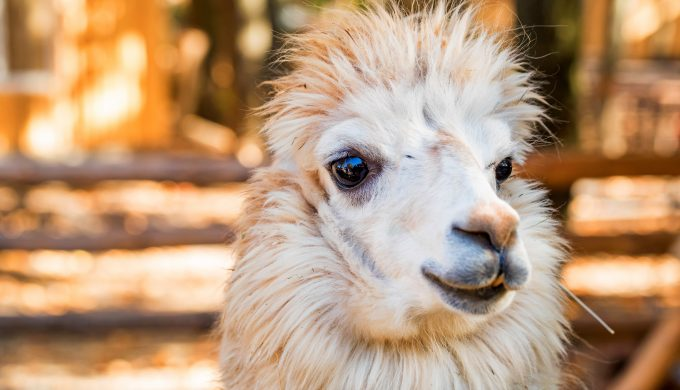 Is the Ownership of Exotic Animals Becoming an Issue in Texas?