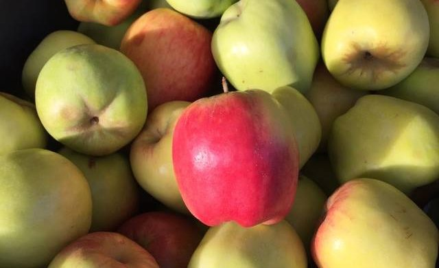 5 Fruit Trees to Start Your Hill Country Backyard Orchard