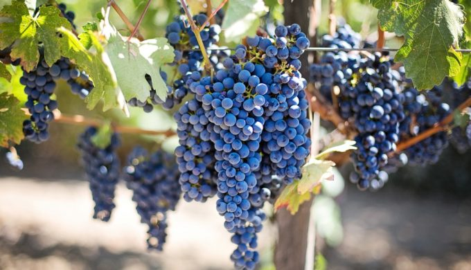 The Grape Debate: Texas Winemakers and Grape Growers Talk Numbers While Dust Settles on HB 1514