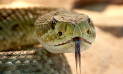 Texas Man Accused of Biting Off a Rattlesnake's Rattle and Hiding the Snake in Neighbor's RV