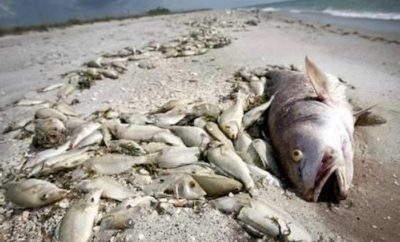 TPWD Investigates 100s of Dead Fish Washing Ashore on Texas Coast
