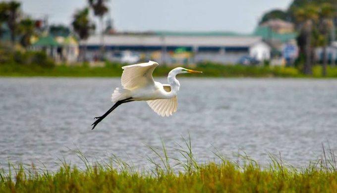 Rockport birds