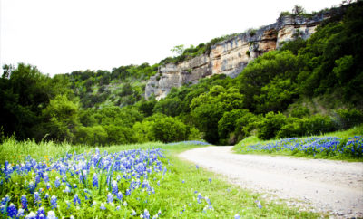 San Saba county in bloom.