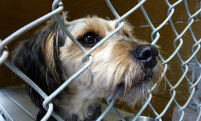 Plano program pet adoption