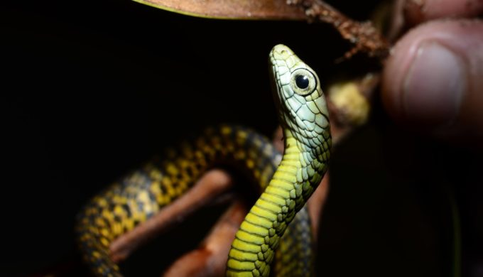 """The Charming """"Hiss""""-tory of Snake Farm: The Texas Zoo that Inspired the Song"""