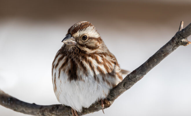Caussey's Corner: The Beat of a Texas Sparrow's Heart