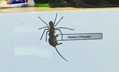 Mouse No Match for Creepy Over-sized Spider