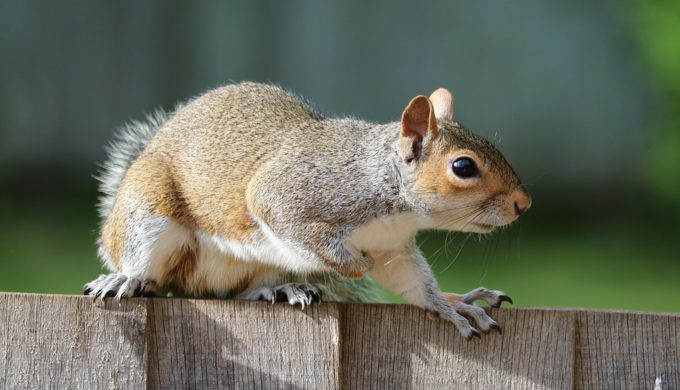 Squirrel Reportedly Tugs on Woman's Pants to Get Help