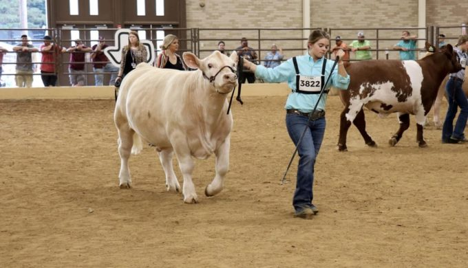 Mikala Grady's Grand Champion Steer Breaks Big Tex Auction Record