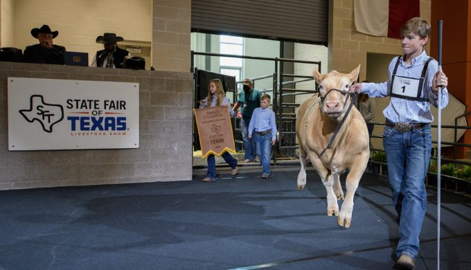 Big Tex Youth Auction Grand Champion Market Steer Sells for $75,000