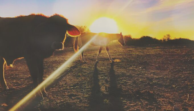 sunset-on-the-ranch_t20_a8GjdE