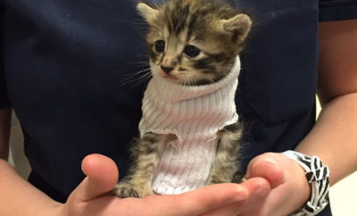 sweater kitten