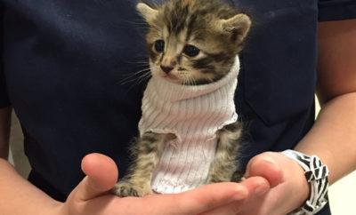 sweater kitten