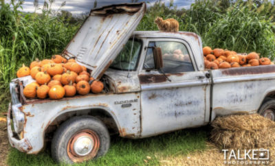 sweet berry farm, marble falls, highland lakes, hill country, autumn, pumpkins
