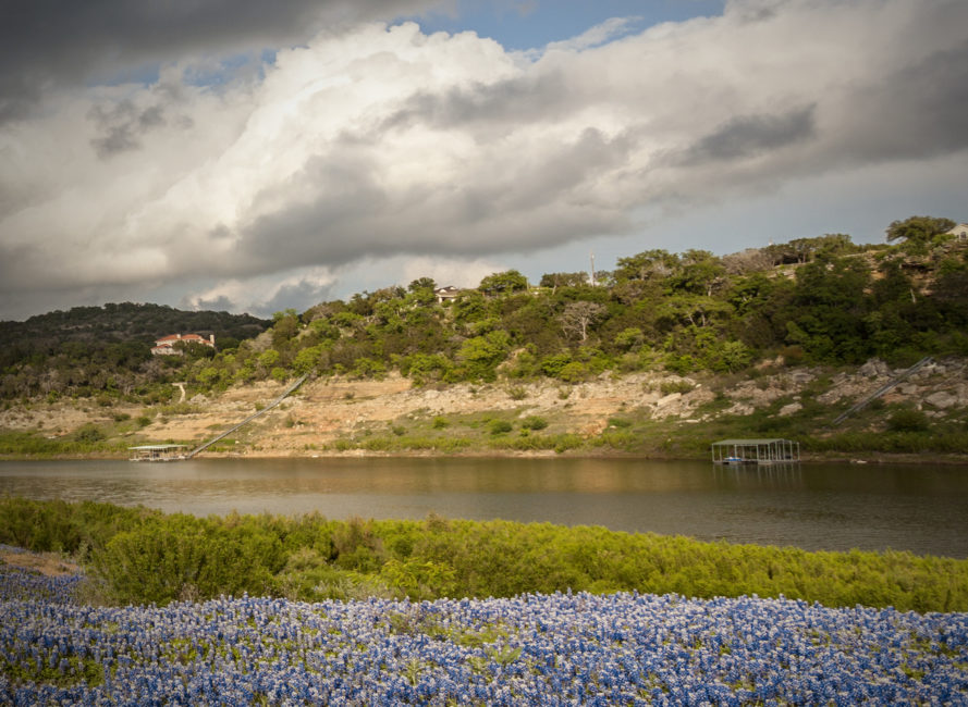 Bluebonnets in full bloom at the bottom of Lake Travis.