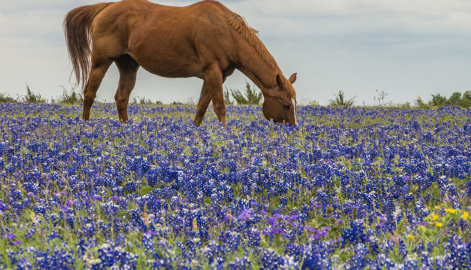 5 Texas Hill Country Towns Where You Can See Amazing Bluebonnets