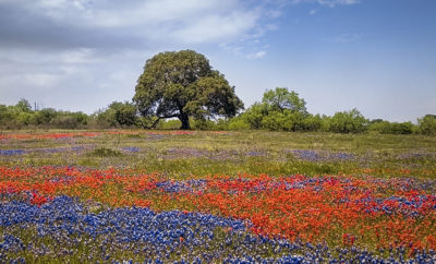 15 Incredible Texas Wildflowers You Should Know