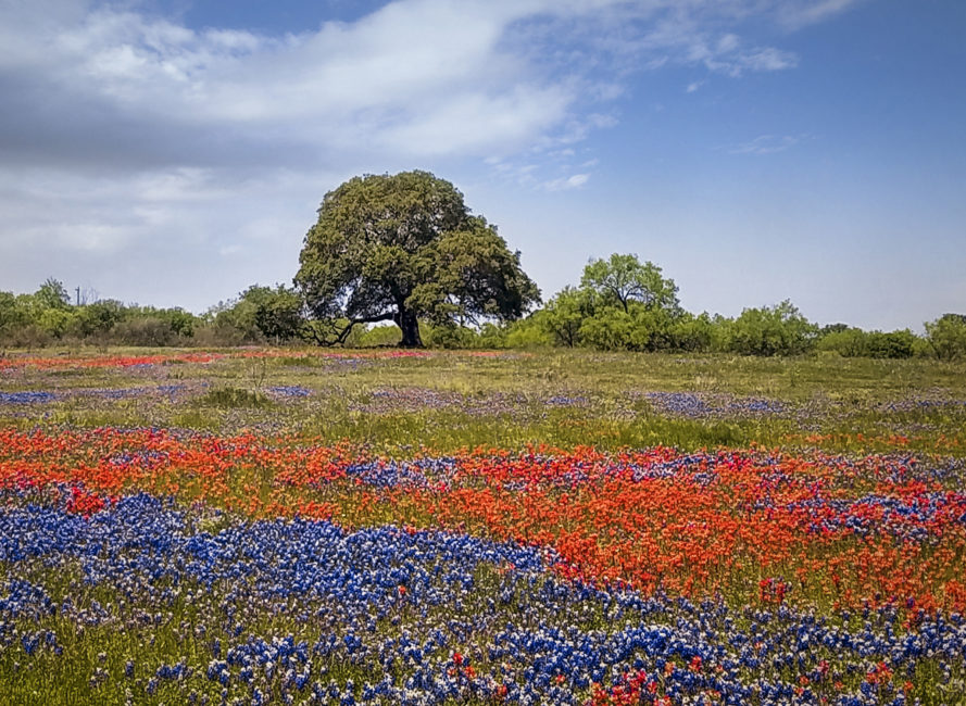 The Perfect Texas Hill Country Wildflower Day Trip