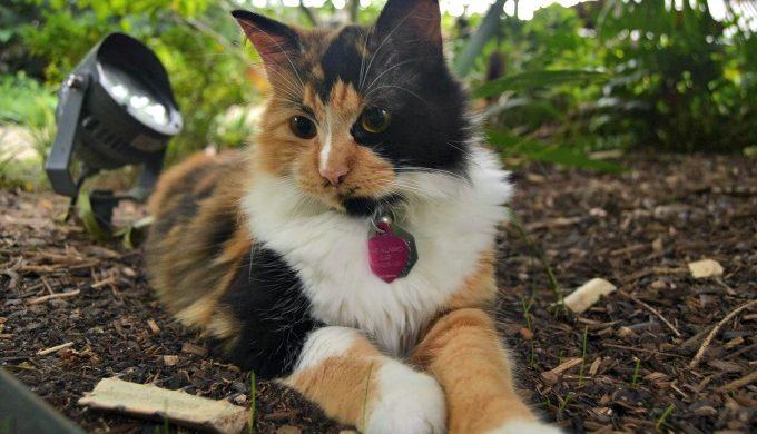 the alamo cat