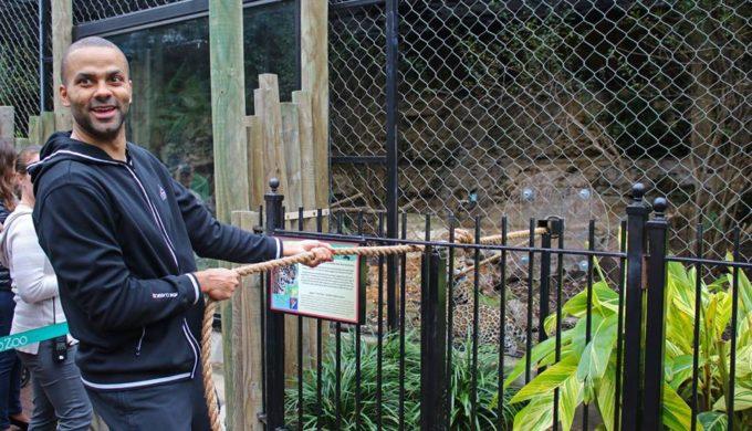tony-parker-jaguars