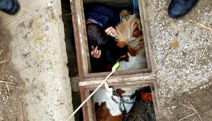 Small Pony in 'Stable' Condition After Rescue From Storm Drain