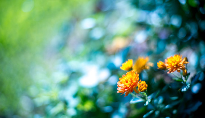 A Guide to Watering a Texas Hill Country Garden in Extreme Heat